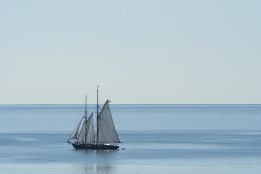 Bluenose from our window