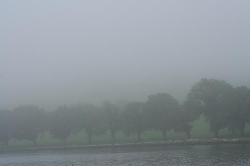 Fog 7