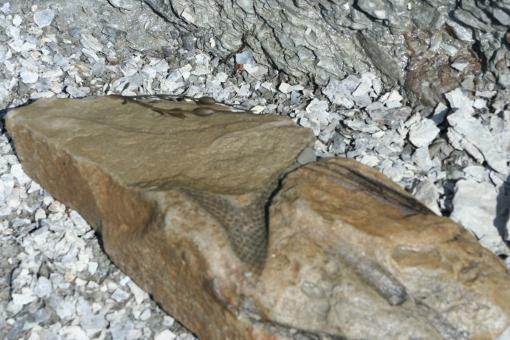 8 Fossil E